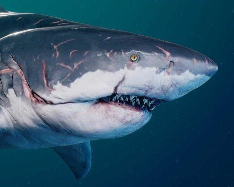 Elder Level Shark | Maneater Wiki | Age Evolution Guide
